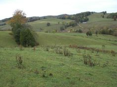 Beautiful Farm Land In Tazewell - Sneedville Tennessee Beautiful Farm, Beautiful Places, How To Buy Land, Acceptance, Farmer, Tennessee, Roots, Vineyard, Country Roads
