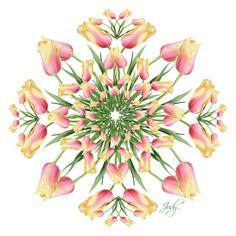"""Just 1 Flower- Tulip Mandala"" by judymjohnson ❤ liked on Polyvore featuring art, Flowers, mandala and judymjohnson"