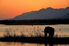 The amazing Zambezi River