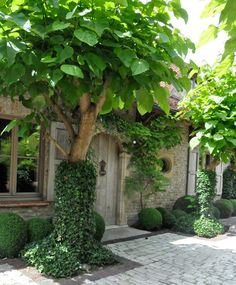 Arched wooden entry door, stone exterior, shrubbery and tree. Formal Garden Design, Charming House, Garden Cottage, Brick Cottage, Topiary, Garden Styles, Dream Garden, Garden Inspiration, Curb Appeal