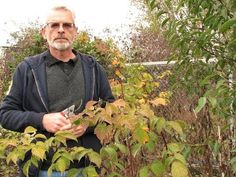Обрезка ягодных кустарников осенью. Мастер - класс - YouTube