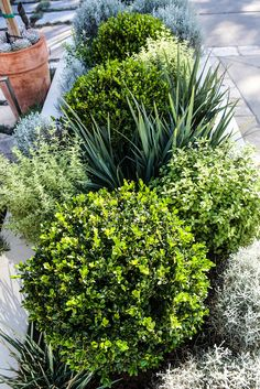 41 Favorite Dry Garden Landscaping You Must Have Favorite Dry Garden Landscaping You Must Have 20 Dry Garden, Garden Shrubs, Landscaping Plants, Outdoor Landscaping, Front Yard Landscaping, Outdoor Gardens, Landscaping Ideas, Landscape Design, Garden Design