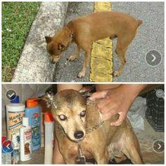 LOST DOG: 07/07/2016 - Miramar, Florida, FL, United States. Ref#: L34308 - #CritterAlert #LostPet #LostDog #MissingDog