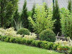 Czasem słońce czasem deszcz - strona 156 - Forum ogrodnicze - Ogrodowisko