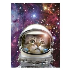 Shop Cat astronaut - crazy cat - cat postcard created by RedSamurais. Cute Cats, Funny Cats, Funny Postcards, F2 Savannah Cat, Cat Astronaut, Birthday Postcards, Angry Cat, Little Bit, Space Cat