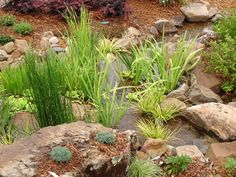 Ponds & Falls - Pond style and edging gallery Bog Garden, Herb Garden, Home And Garden, Home Landscaping, Growing Plants, Water Gardens, Old Things, Herbs, Landscape