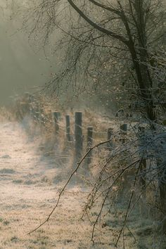 "gyclli:  ""  Frosty fence by Keith Millard on 500px.com  """