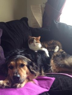 Sometimes, you just need to see a cat and dog hangin' out together. | 22 Cute Animals Who Just Want You To Be Happy