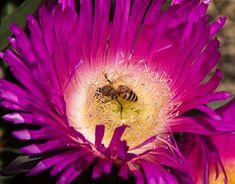 Discover and download free images - Pixabay Free Pictures, Free Images, Australian Flowers, Bees And Wasps, Exterior Colors, High Quality Images, Backgrounds, Colour, Color