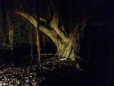 Spooky tree Cyprus paphos