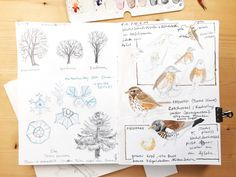 Starting or keeping a nature journal in the winter months may seem counterintuitive, because when you look outside it seems there's not much there. There is hap Floral Illustrations, Botanical Illustration, Snowflake Photography, Winter Drawings, Bird Sketch, Nature Sketch, Creative Class, Floral Drawing, Winter Is Here
