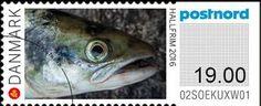 Atlantic Salmon (Salmo salar)