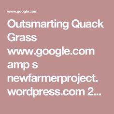 Outsmarting Quack Grass www.google.com amp s newfarmerproject.wordpress.com 2015 06 08 outsmarting-quackgrass amp