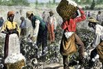 this are african slaves on the plantation working down the sun.This plantation is in Jamestown, Virginia, in 1619, to aid in the production of such lucrative crops as tobacco.