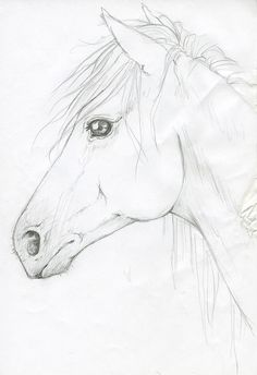 Horse Head by silken.deviantart.com on @deviantART