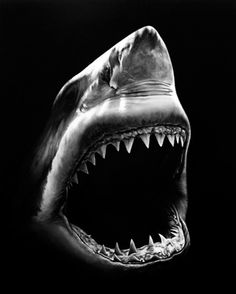 Jaws - Robert Longo  using graphite and charcoal