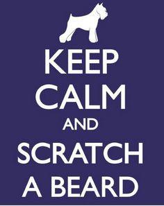 schnauzer rules  : keep calm and scratch a beard