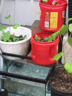 Grow Your Plants in Water! Easy {DIY} Aquaponics System!