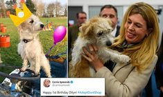 Boris Johnson's fiancée Carrie Symonds wishes Dilyn the dog a happy birthday | Daily Mail Online Happy First Birthday, Happy 1st Birthdays, Boris Johnson, Carrie, Carry On, Wish, Pup, Adoption, Dogs