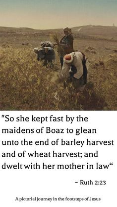 """Harvesting in the fields of Bethlehem 