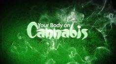 Your Body on Cannabis (New Documentary)