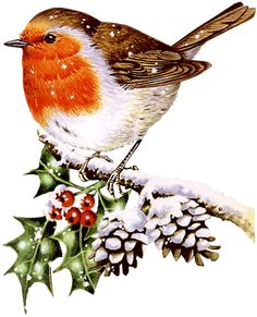 16 Ideas For Robin Bird Pictures Vintage Christmas Christmas Bird, Christmas Scenes, Christmas Clipart, Christmas Printables, Christmas Pictures, Vintage Christmas, Xmas, Watercolor Christmas Cards, Christmas Drawing