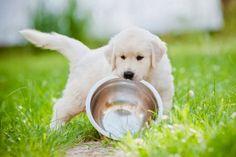 Dieta oczyszczająca psią wątrobę