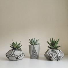 Botanica Home concrete pots