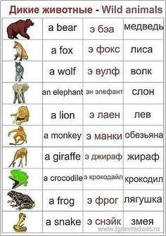Учим английский язык в картинках
