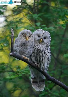 Owl and baby animal nature photography