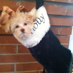 Puppy in a stocking.