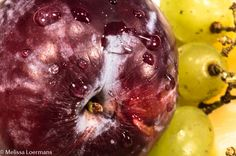 L4M1AS3: Textures up close- Image 2: Manual Mode, 0.5 sec, F 16, 55mm focal length, ISO 200, flash off. Used home made 3 pt lighting plan, with a white cyclorama. I love the water droplets and the texture of the plum. Nikon D3200 camera, placed upon a tripod with a remote shutter release button,