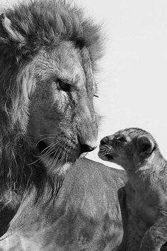 Belleza salvaje ♥️
