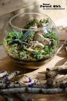 terrarium florarium succulent