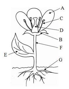 stavba-rostliny-s-pismeny