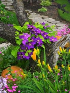 In the garden... clematis, day lilies, and phlox