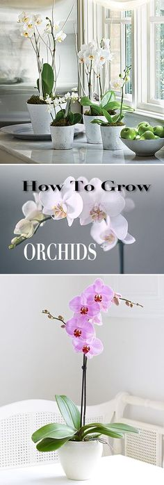 How to Grow Orchids • Great tips and Ideas! #Gardens #Container_Gardening #Garden_Decor #Garden_Decor_Ideas #Garden_Design