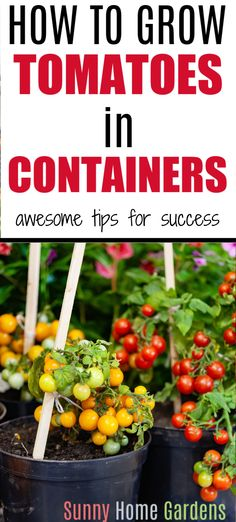 How to grow tomatoes in containers. Great tips and ideas on how to grow tomatoes in containers, pots, 5 gallon pots. Tomatoes are great plants for container gardening. Tips For Growing Tomatoes, Growing Tomatoes In Containers, Growing Veggies, Growing Herbs, How To Grow Tomatoes, Diy Gardening, Bucket Gardening, Greenhouse Gardening, Container Gardening Vegetables