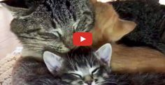 Grumpy Old Feral Cat is a Big Softy at Heart - We Love Cats and Kittens