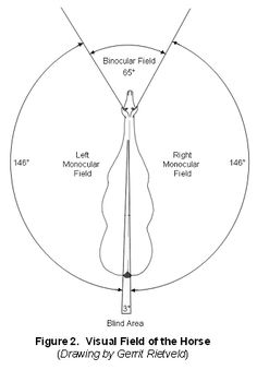 This is a horses sight range. So think about what your horse sees when you ride him with his head low and tucked.