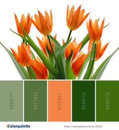 Color Palette ideas from 8839 Flower Images