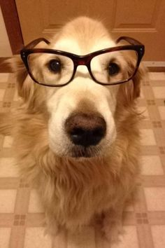 fadee9cbe1afb Dogs with glasses that will outsmart you! check out more at  www.boredomkicker.
