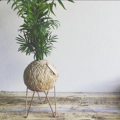 ¿Cómo cuido de mi sala kokedama palma? - Tips & Consejos