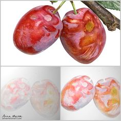 Here's a bit of the process I went through to build up the bloom to these tasty plums, painted big at 48 x 36 cm (19 x 14 inches)... Watercolor Fruit, Watercolor Artists, Watercolor Paintings, Watercolours, Plum Paint, Anna Mason, Fruits Drawing, Learn To Paint, Botanical Art
