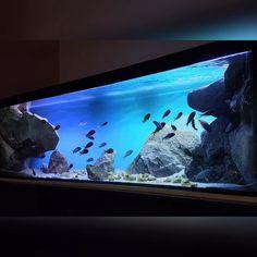 Aquarium Landscape, Nature Aquarium, Planted Aquarium, Cichlid Aquarium, Aquarium Fish, Fish Tank Aquaponics, Fish Aquarium Decorations, Aqua Decor, Aquarium Backgrounds