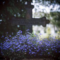 Cemetery- peaceful & beautiful