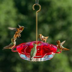 Tips from Droll Yankees: Happy Hummingbirds Equals Buzzing Backyard Bird Feeding. Click to read!