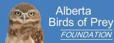 Alberta, Canada Birds of Prey Center