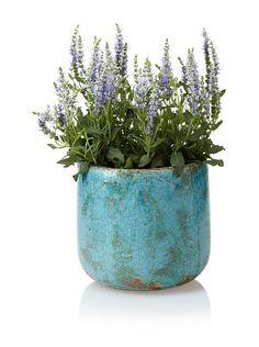 Wald Imports Decorative Ceramic Planter, Antique Blue, http://www.myhabit.com/redirect?url=http%3A%2F%2Fwww.myhabit.com%2F%3F%23page%3Dd%26dept%3Dhome%26sale%3DA1RCBEG66RJKCS%26asin%3DB00812GJQS%26cAsin%3DB00812GJQS
