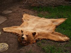 Bear Skin Rug Yup We Really Want One To Put In Front Of Our Fireplace